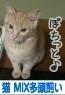 ブログ村ランキング参加中♪ 応援のぽちをどうぞよろしく(*_ _)ペコ
